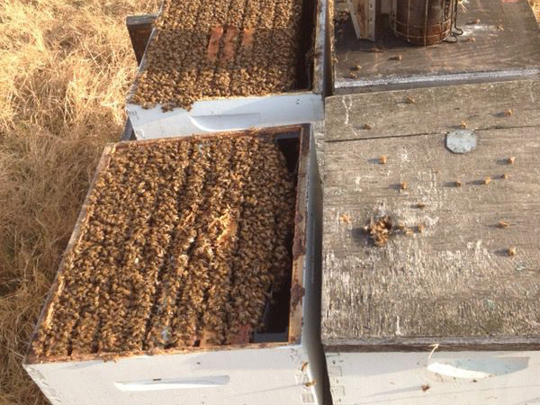 Double Brood Box Hives